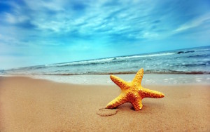 Beautiful-Sea-Starfish